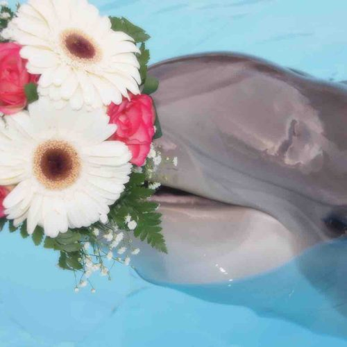 Dolphin as a guest at your Algarve Wedding